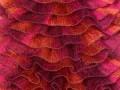 Samba - růžovooranžovovínová