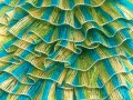 Samba - tyrkysovozelená