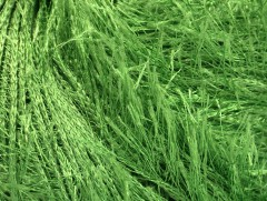 Eylash - zelená 1