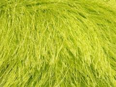 Long Eylash - světle zelená 1